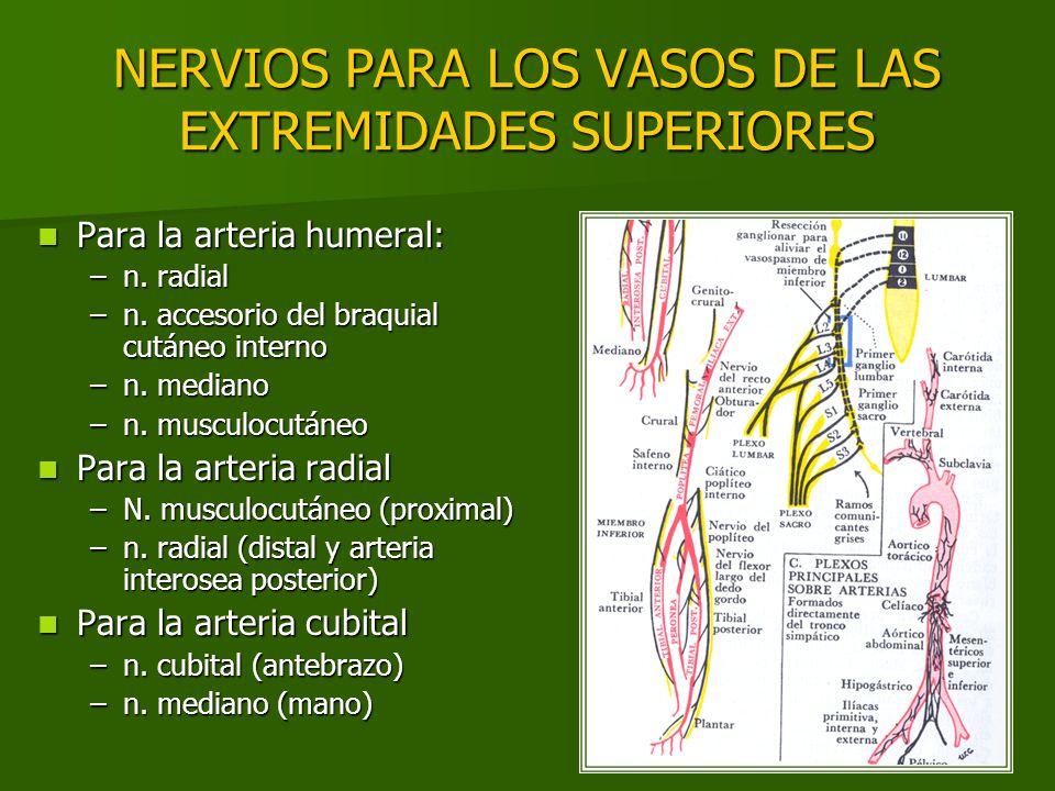 NERVIOS PARA LOS VASOS DE LAS EXTREMIDADES SUPERIORES