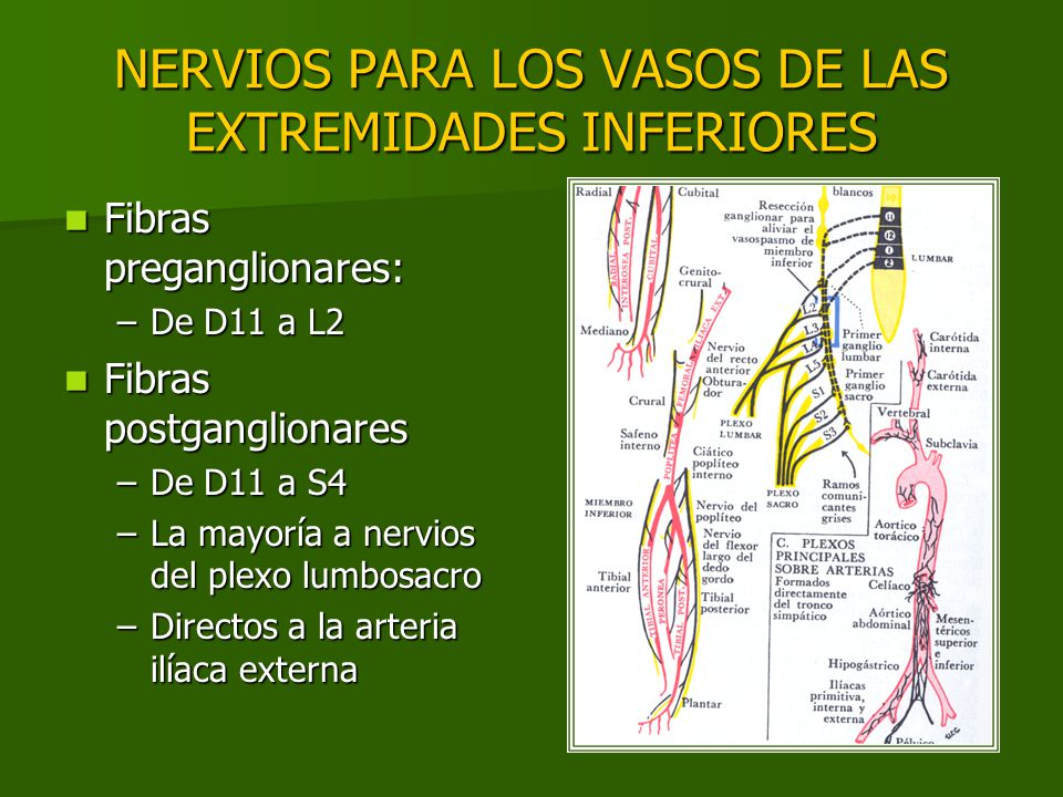 NERVIOS PARA LOS VASOS DE LAS EXTREMIDADES INFERIORES