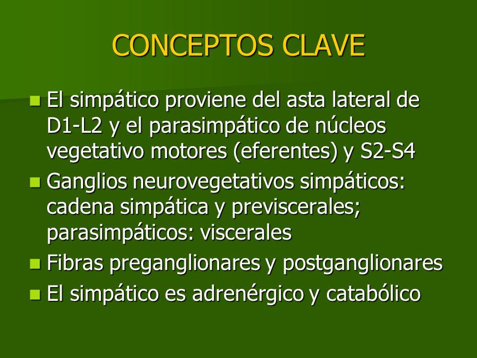 CONCEPTOS CLAVE El simpático proviene del asta lateral de D1-L2 y el parasimpático de núcleos vegetativo motores (eferentes) y S2-S4.