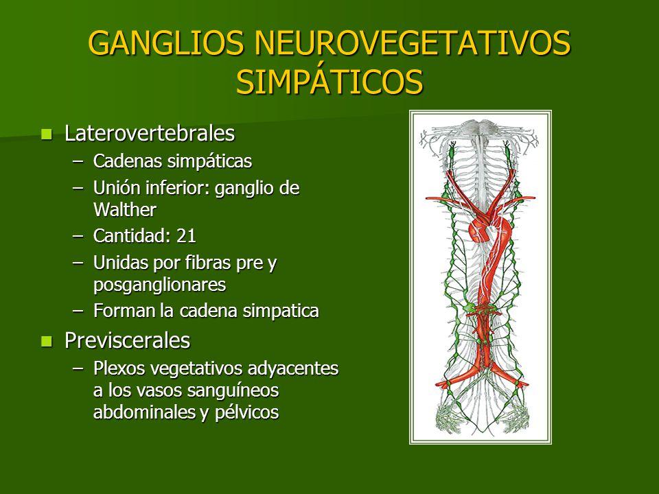 GANGLIOS NEUROVEGETATIVOS SIMPÁTICOS