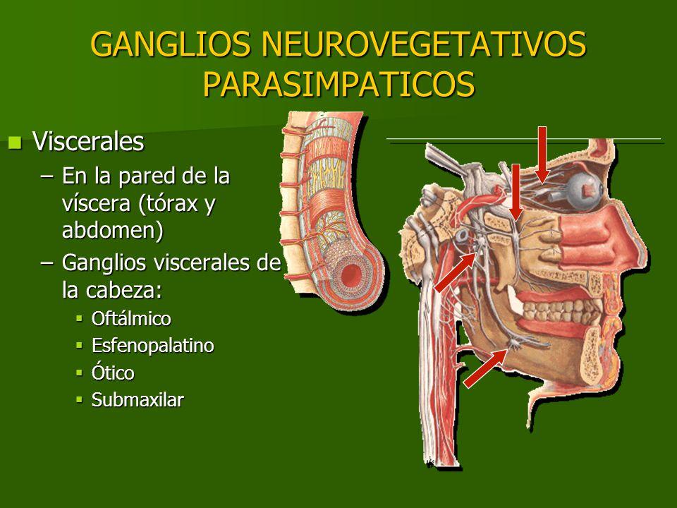 GANGLIOS NEUROVEGETATIVOS PARASIMPATICOS
