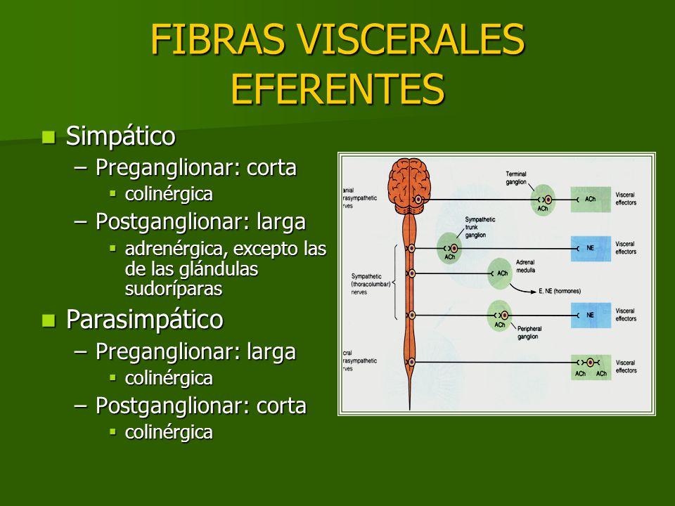 FIBRAS VISCERALES EFERENTES