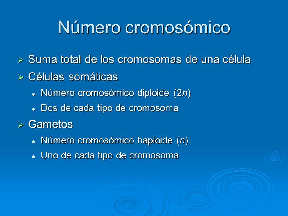 Número cromosómico Suma total de los cromosomas de una célula