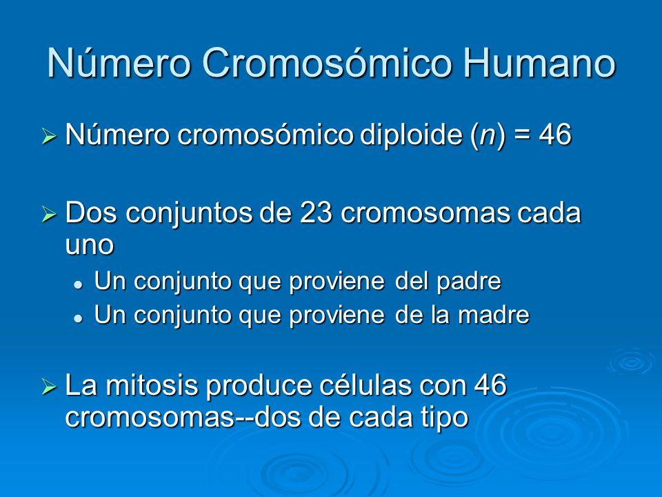 Número Cromosómico Humano