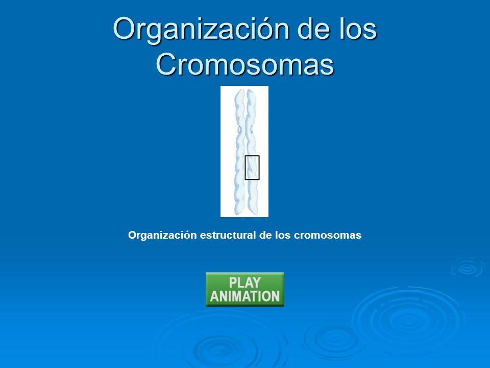 Organización de los Cromosomas