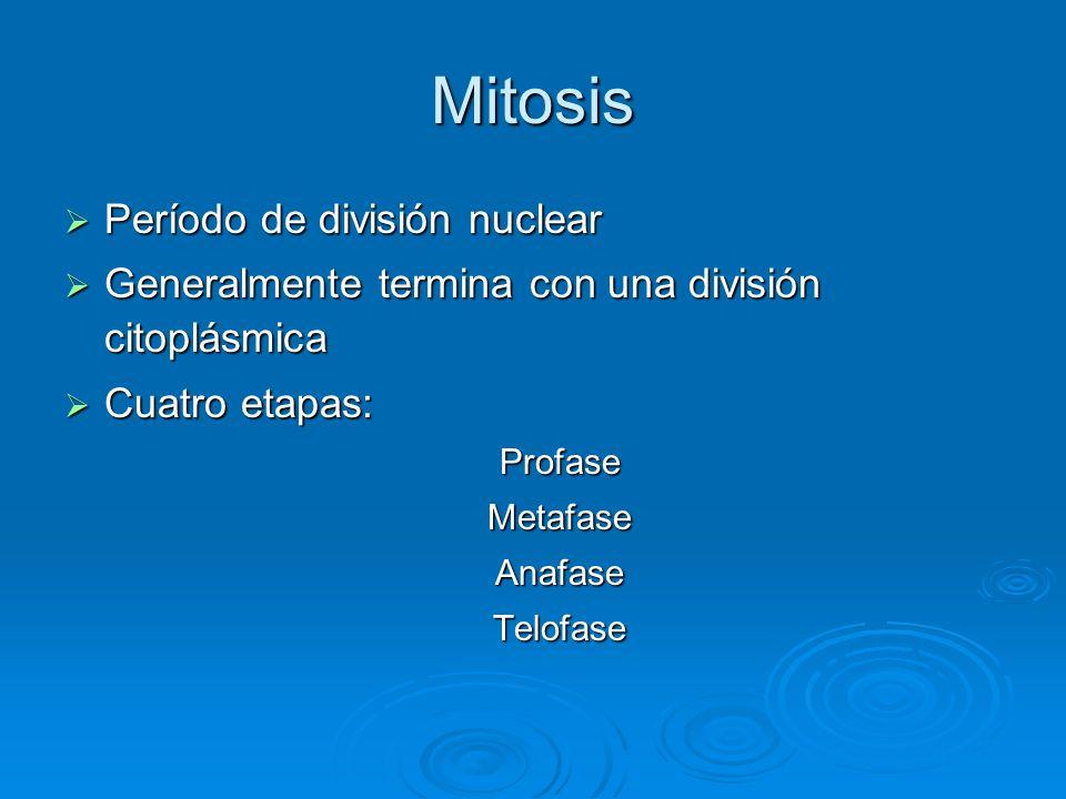 Mitosis Período de división nuclear