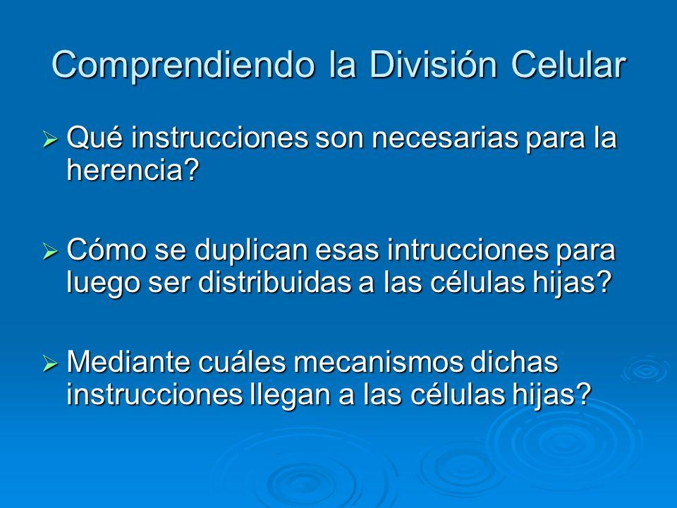 Comprendiendo la División Celular