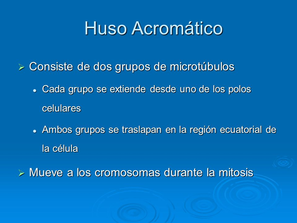 Huso Acromático Consiste de dos grupos de microtúbulos