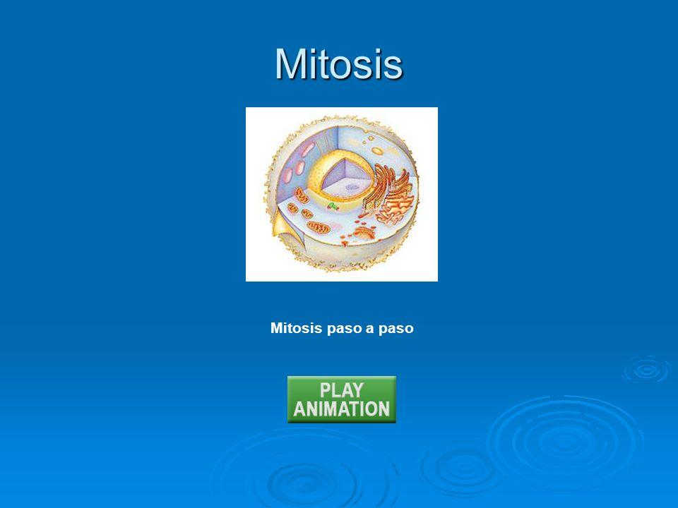 Mitosis Mitosis paso a paso