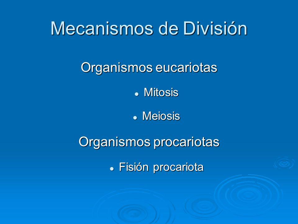 Mecanismos de División