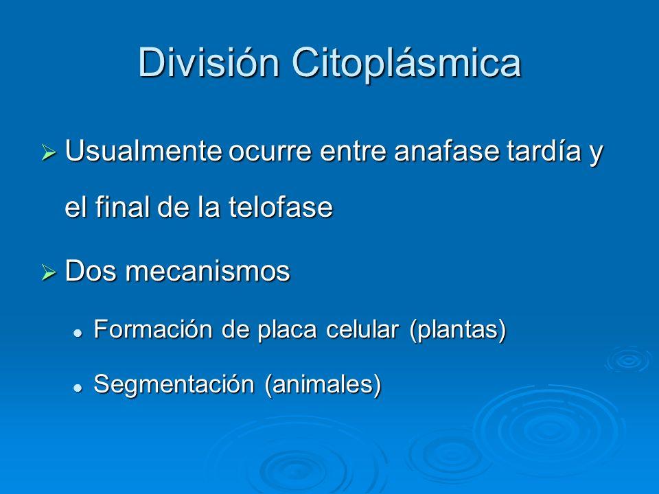 División Citoplásmica