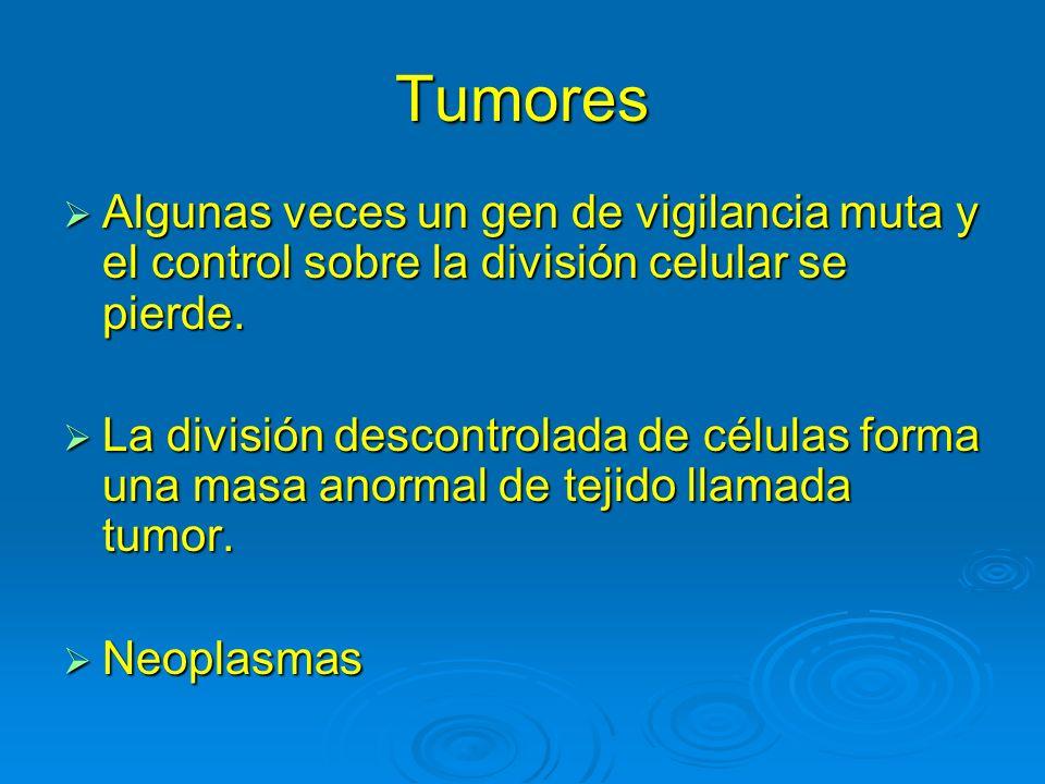 Tumores Algunas veces un gen de vigilancia muta y el control sobre la división celular se pierde.