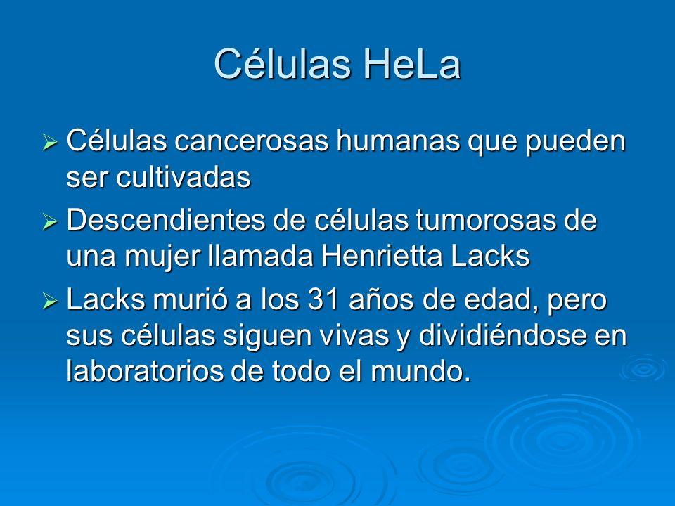 Células HeLa Células cancerosas humanas que pueden ser cultivadas