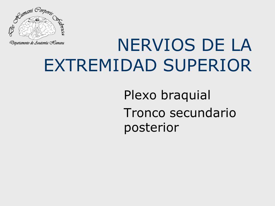 NERVIOS DE LA EXTREMIDAD SUPERIOR