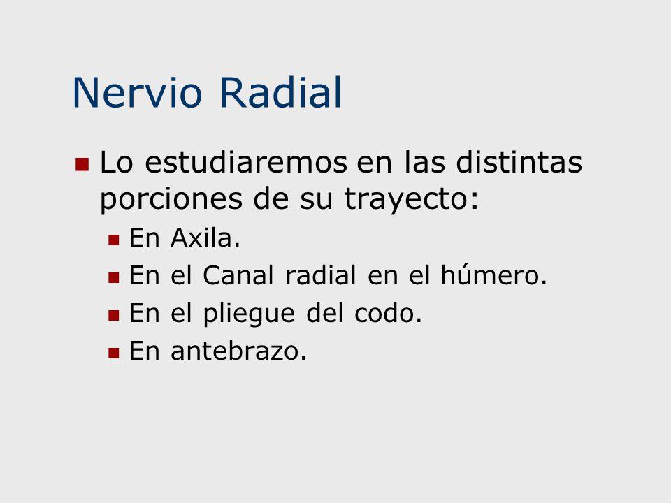 Nervio Radial Lo estudiaremos en las distintas porciones de su trayecto: En Axila. En el Canal radial en el húmero.