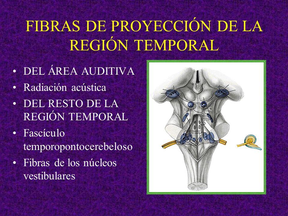 FIBRAS DE PROYECCIÓN DE LA REGIÓN TEMPORAL