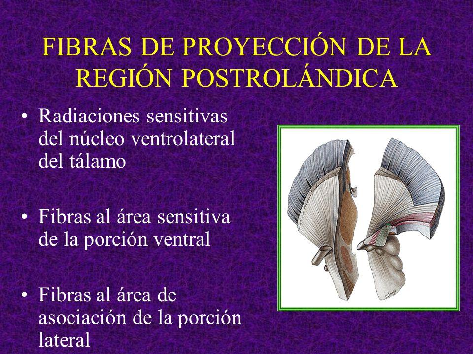 FIBRAS DE PROYECCIÓN DE LA REGIÓN POSTROLÁNDICA