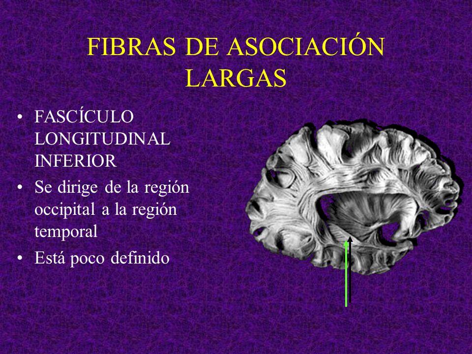 FIBRAS DE ASOCIACIÓN LARGAS