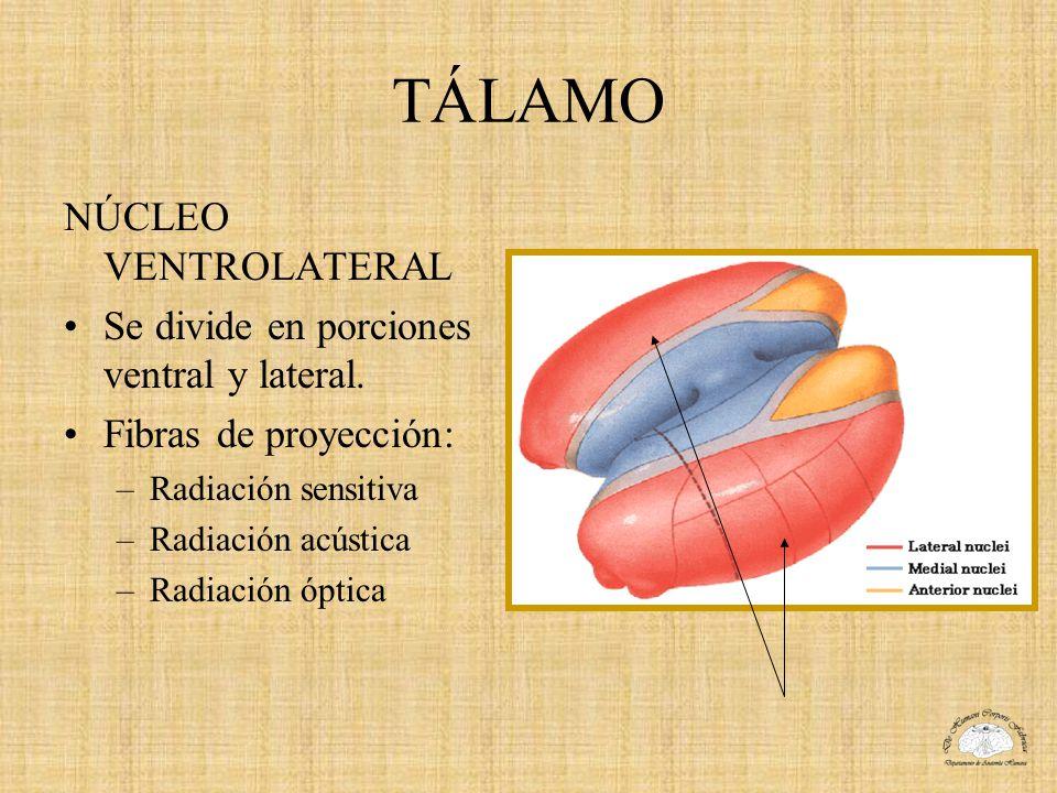 TÁLAMO NÚCLEO VENTROLATERAL Se divide en porciones ventral y lateral.