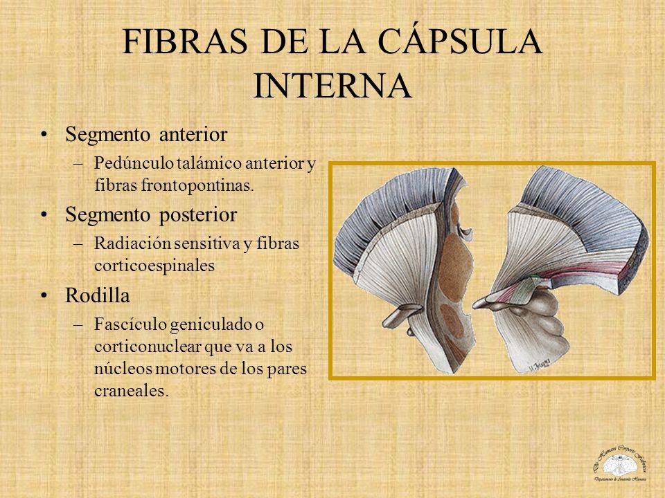 FIBRAS DE LA CÁPSULA INTERNA
