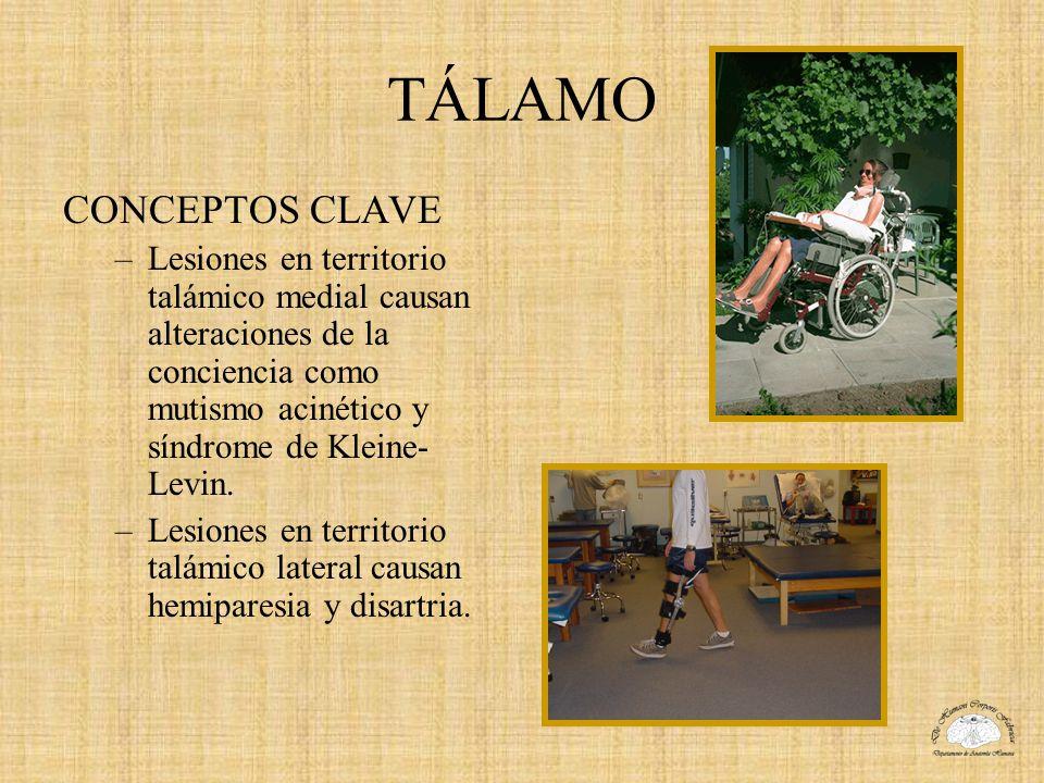 TÁLAMO CONCEPTOS CLAVE