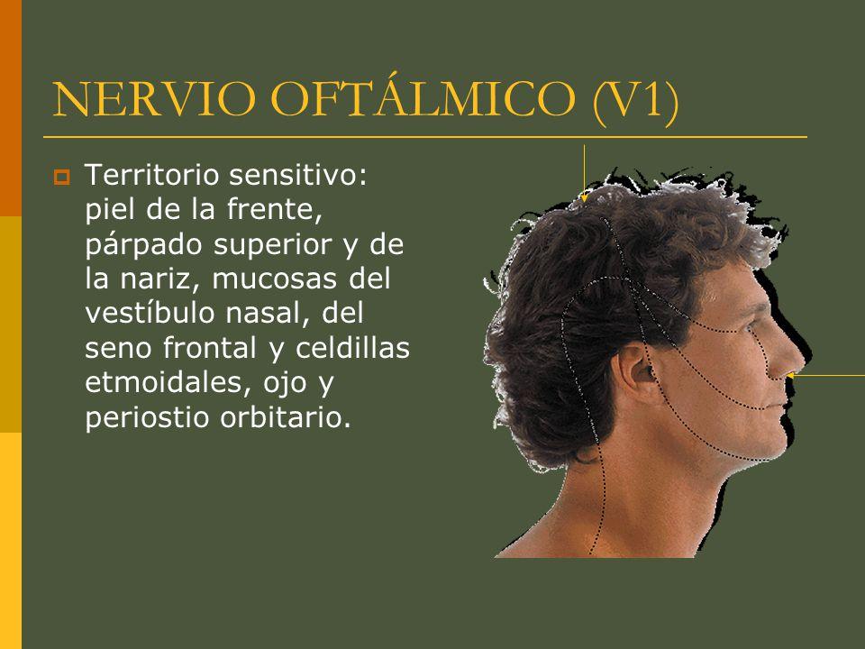 NERVIO OFTÁLMICO (V1)