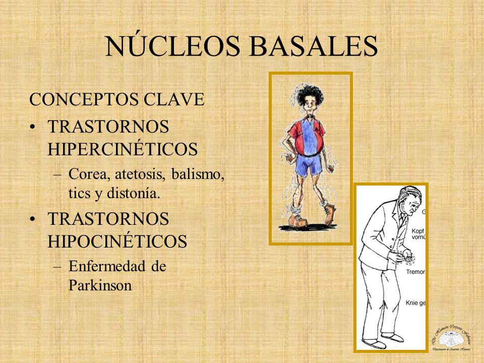 NÚCLEOS BASALES CONCEPTOS CLAVE TRASTORNOS HIPERCINÉTICOS