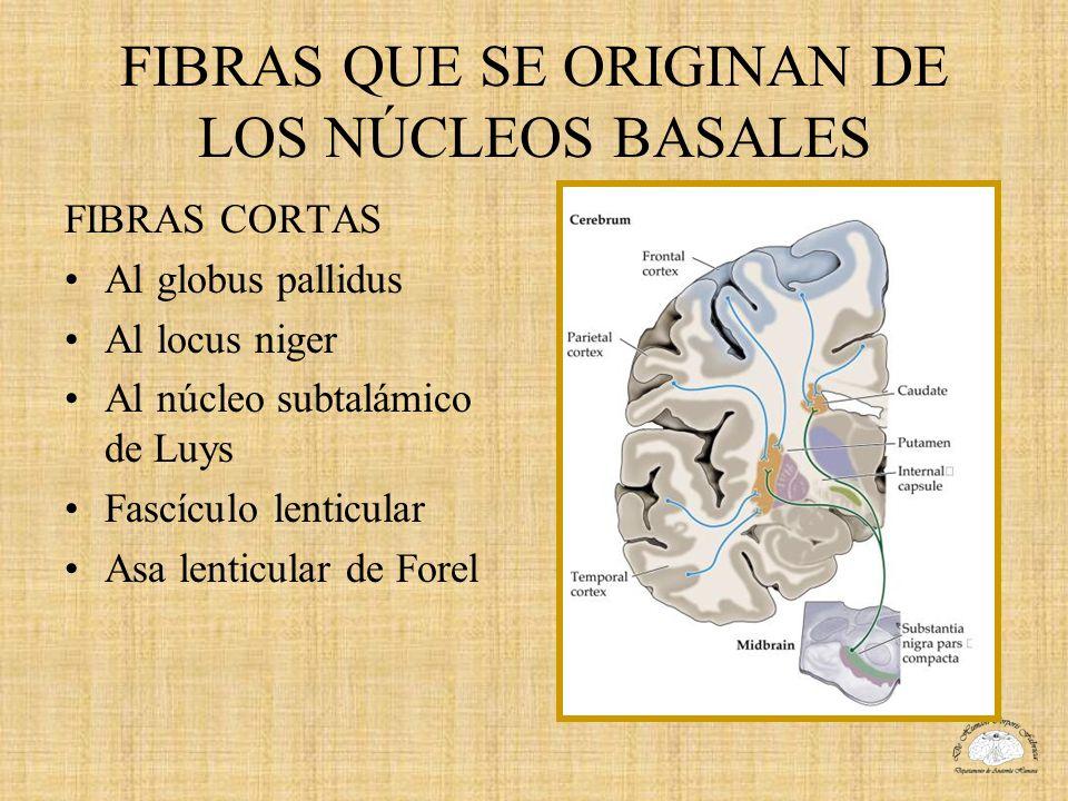 FIBRAS QUE SE ORIGINAN DE LOS NÚCLEOS BASALES
