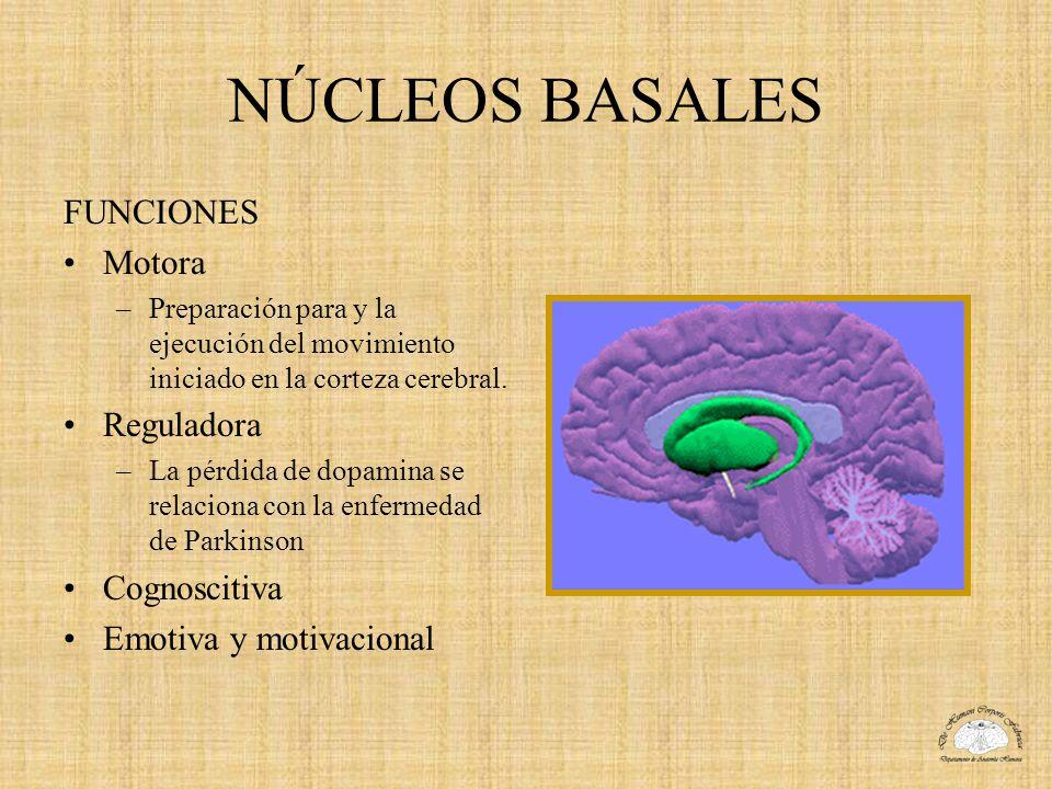 NÚCLEOS BASALES FUNCIONES Motora Reguladora Cognoscitiva