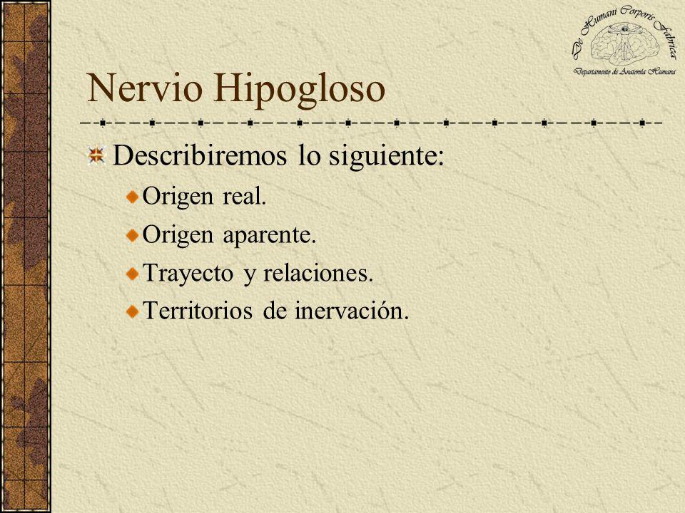 Nervio Hipogloso Describiremos lo siguiente: Origen real.