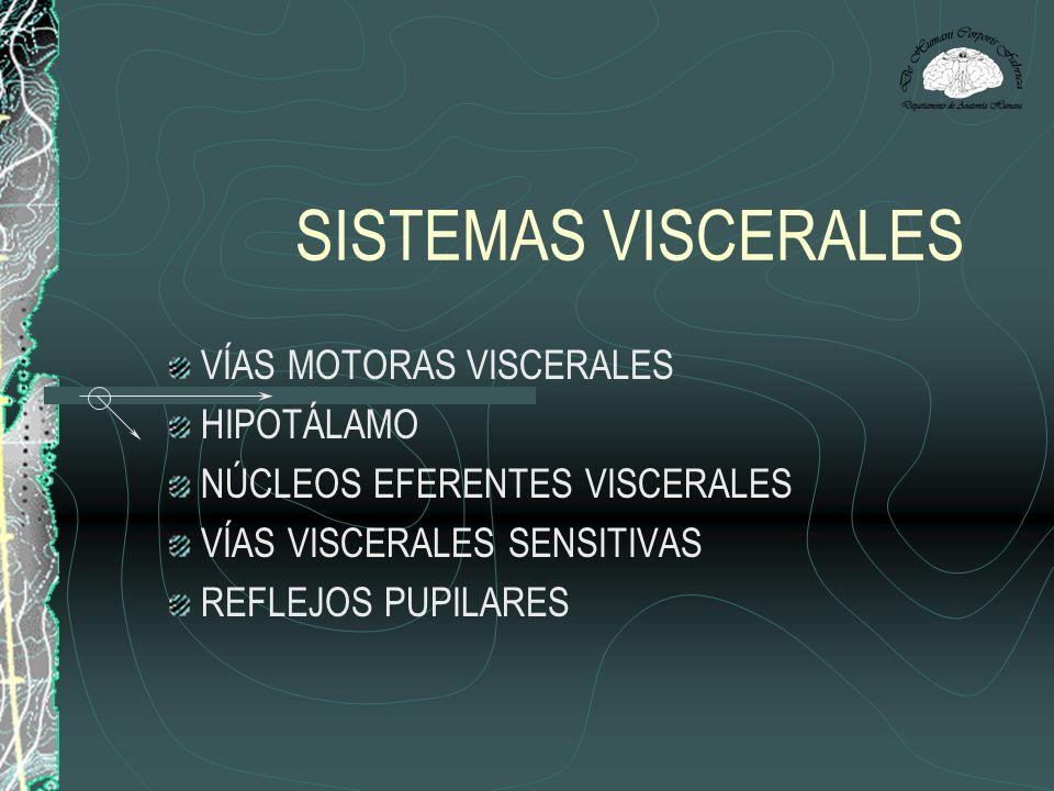 SISTEMAS VISCERALES VÍAS MOTORAS VISCERALES HIPOTÁLAMO