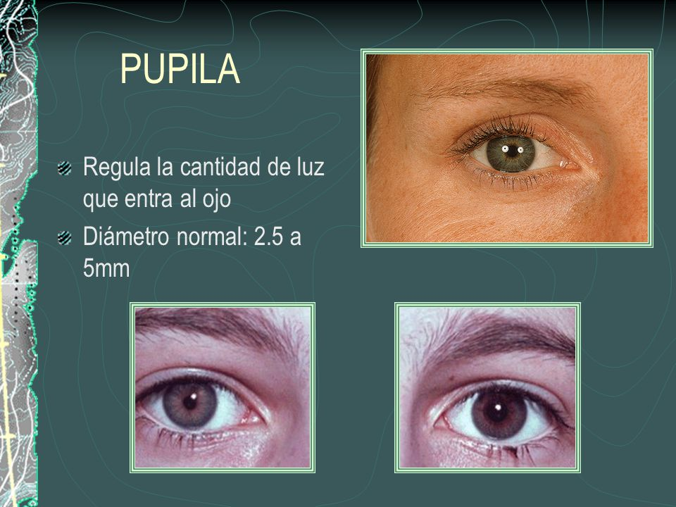 PUPILA Regula la cantidad de luz que entra al ojo