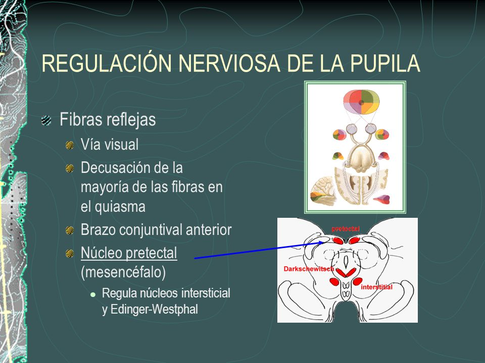 REGULACIÓN NERVIOSA DE LA PUPILA