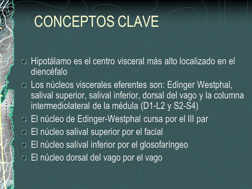 CONCEPTOS CLAVE Hipotálamo es el centro visceral más alto localizado en el diencéfalo.