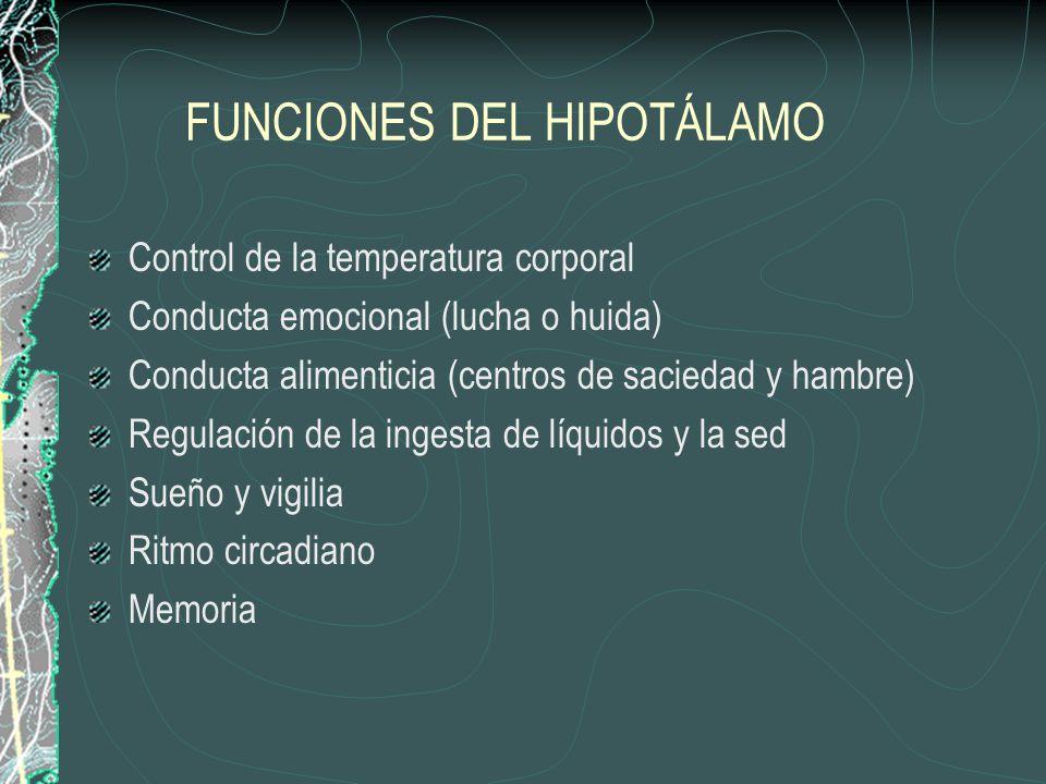 FUNCIONES DEL HIPOTÁLAMO