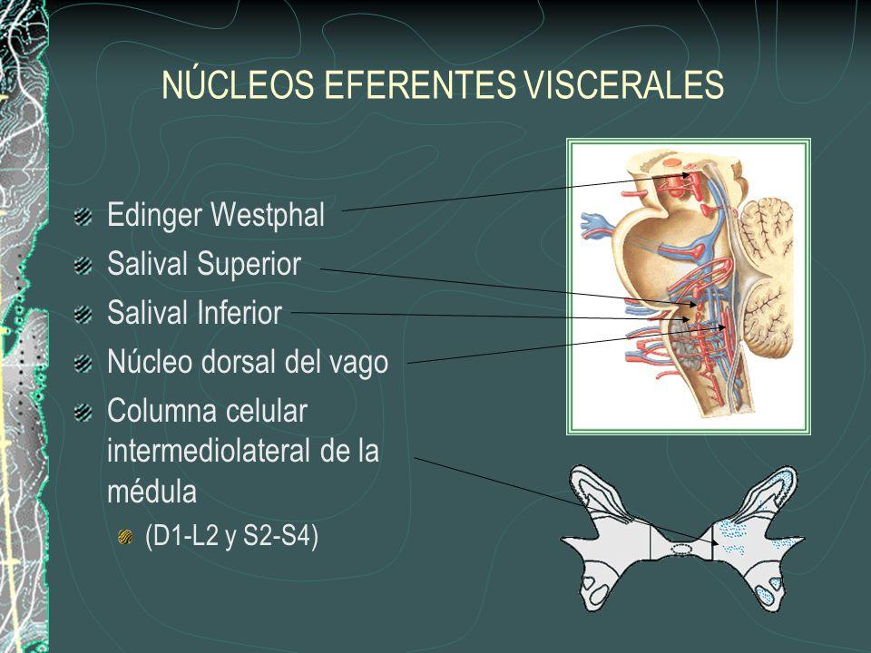 NÚCLEOS EFERENTES VISCERALES