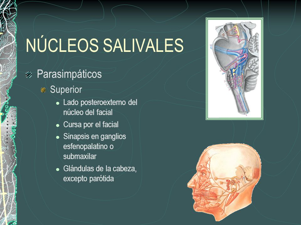 NÚCLEOS SALIVALES Parasimpáticos Superior
