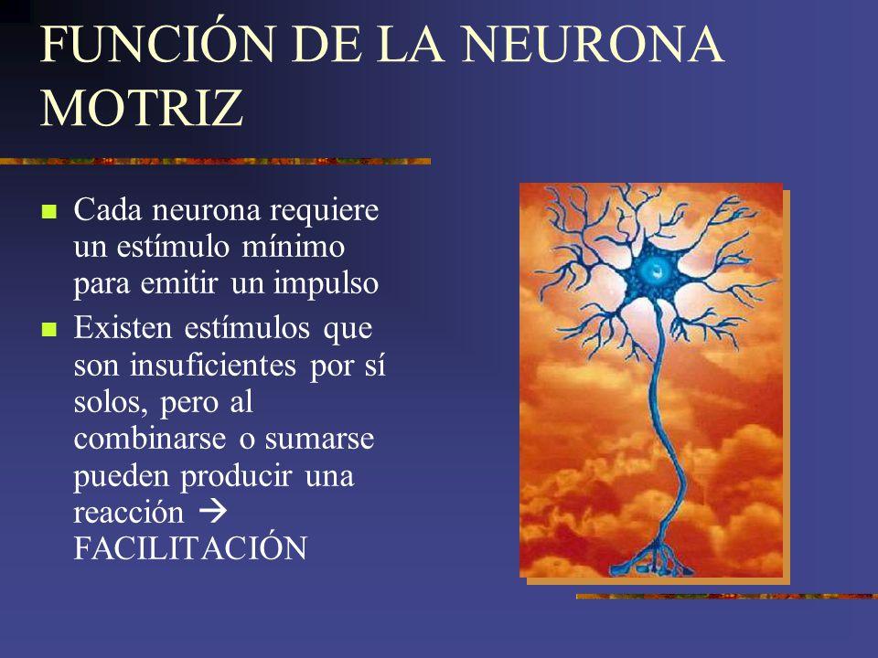 FUNCIÓN DE LA NEURONA MOTRIZ