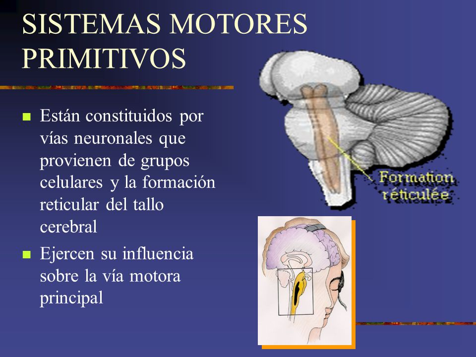 SISTEMAS MOTORES PRIMITIVOS