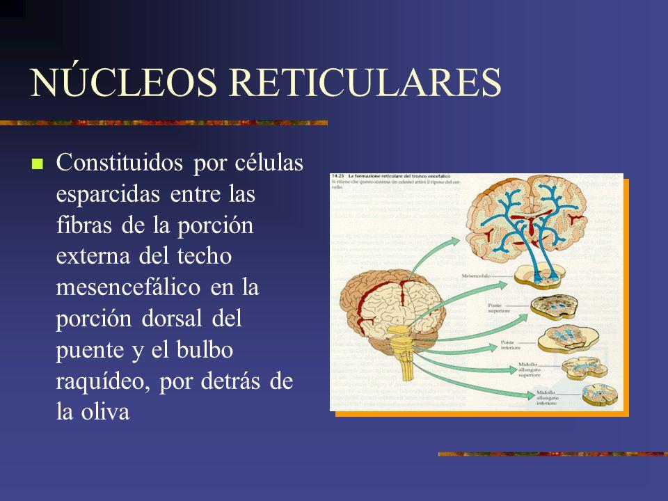 NÚCLEOS RETICULARES
