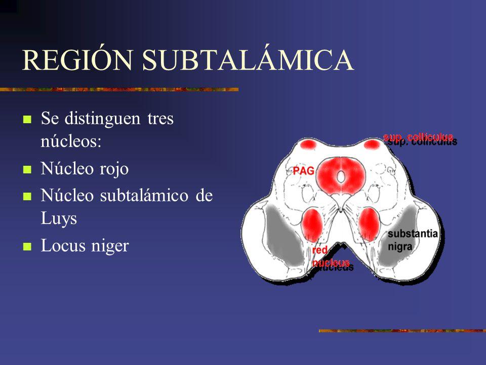 REGIÓN SUBTALÁMICA Se distinguen tres núcleos: Núcleo rojo