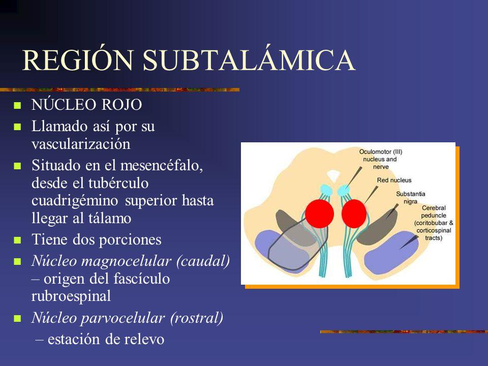 REGIÓN SUBTALÁMICA NÚCLEO ROJO Llamado así por su vascularización