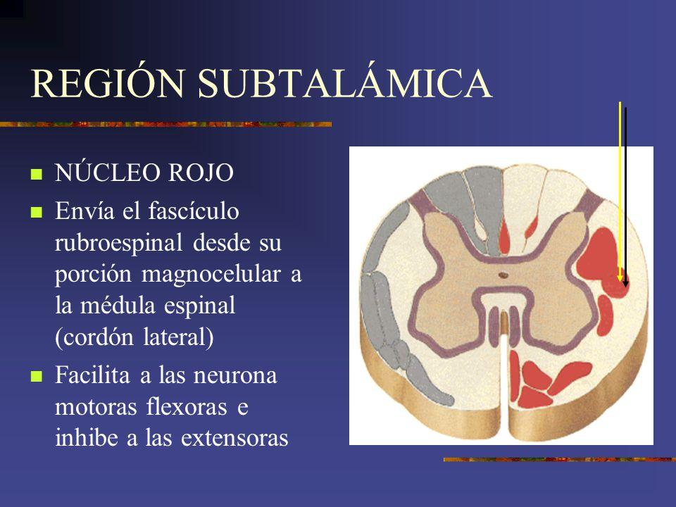 REGIÓN SUBTALÁMICA NÚCLEO ROJO