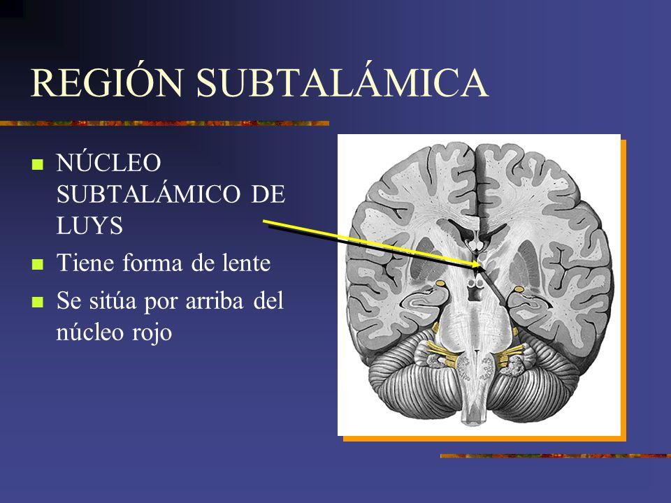 REGIÓN SUBTALÁMICA NÚCLEO SUBTALÁMICO DE LUYS Tiene forma de lente