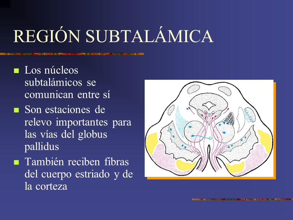 REGIÓN SUBTALÁMICA Los núcleos subtalámicos se comunican entre sí