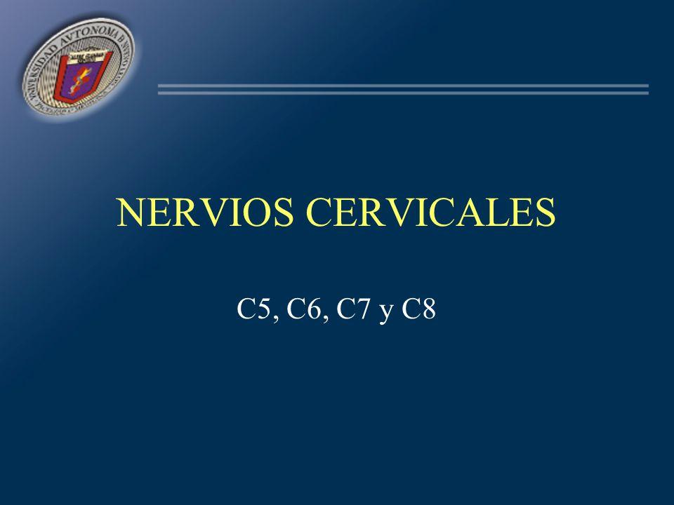 NERVIOS CERVICALES C5, C6, C7 y C8