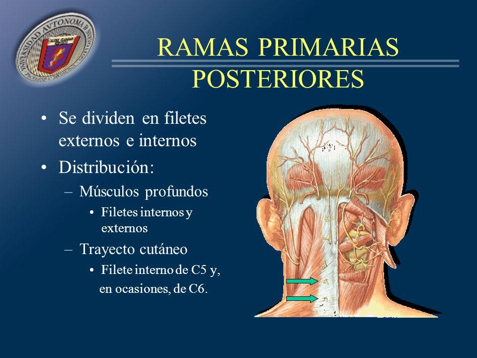 RAMAS PRIMARIAS POSTERIORES