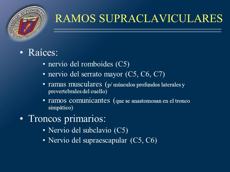 RAMOS SUPRACLAVICULARES