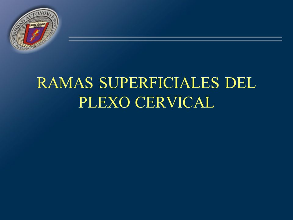 RAMAS SUPERFICIALES DEL PLEXO CERVICAL