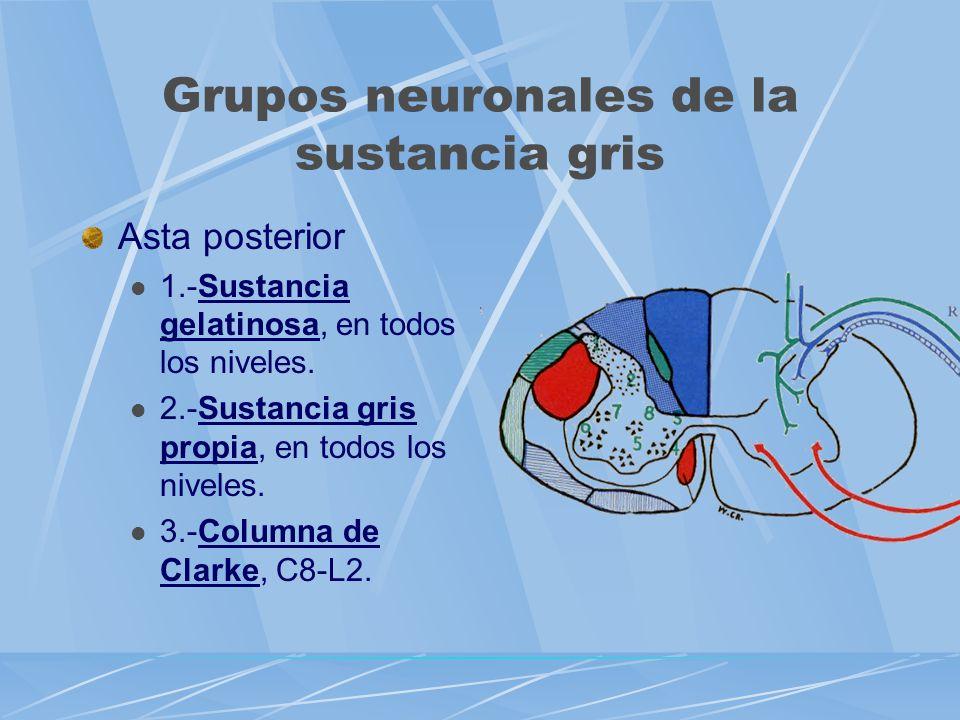 Grupos neuronales de la sustancia gris